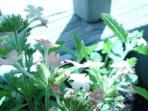 Springplants-03