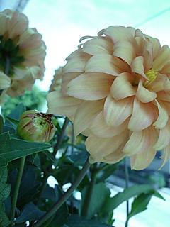 Springplants-01