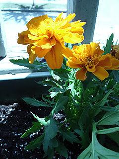 Springplants-02