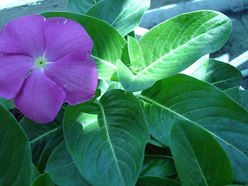 Springplants-04