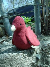 Redbird01_2