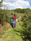 Apple_picking04_3